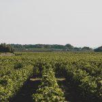 Chateau, vignoble, bordeaux, medoc, crus, bourgeois, oenotourisme, beauvillage, vin, rouge, couqueque, photographie, vinopixo, constant, forme becherat,